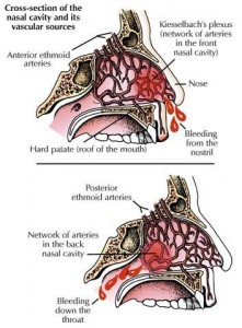 neus bloedvaten anatomie bloedneus